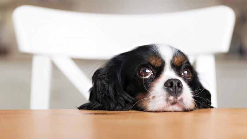 7 Foods That Cause Most Pet Deaths